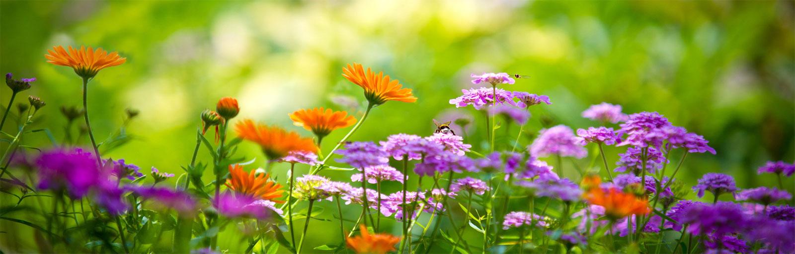 Voor al uw tuinen